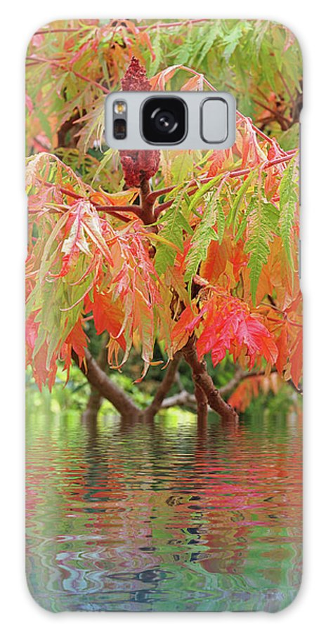 Autumn Leaves Galaxy S8 Case featuring the photograph Sumac Tree Autumn Reflections by Gill Billington