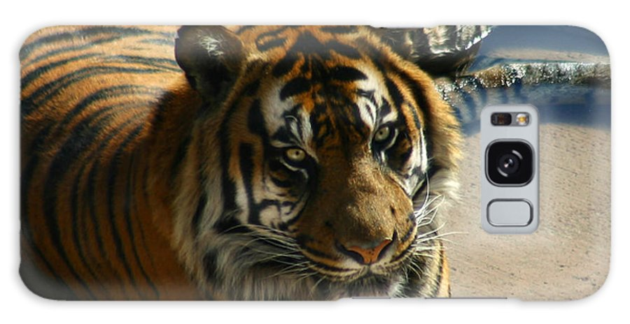 Tiger Galaxy S8 Case featuring the photograph Sumatran Tiger by Anthony Jones