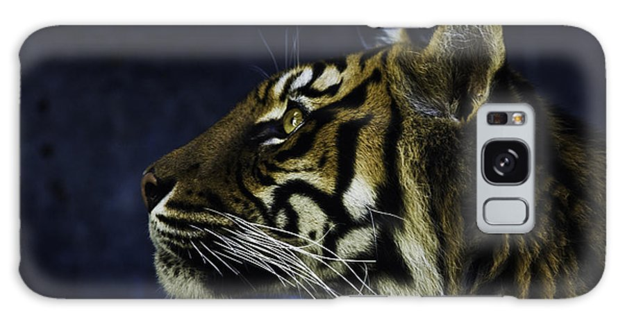 Sumatran Tiger Galaxy S8 Case featuring the photograph Sumatran Tiger Profile by Sheila Smart Fine Art Photography