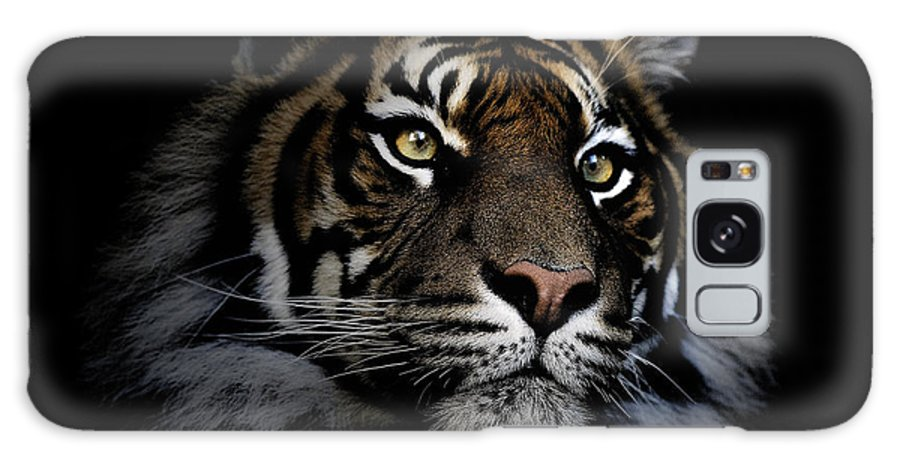 Sumatran Tiger Wildlife Endangered Galaxy S8 Case featuring the photograph Sumatran Tiger by Sheila Smart Fine Art Photography