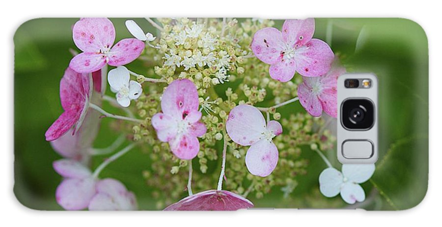 Hydrangea Galaxy S8 Case featuring the photograph Summer Hydrangea 2 by Robert Skuja