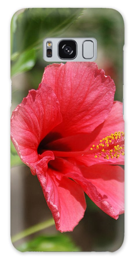 Flowers Galaxy S8 Case featuring the photograph Summer Pink by Margaret Fortunato