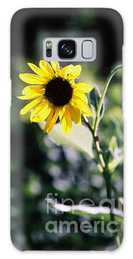 Sunflower Galaxy Case featuring the photograph Summer Sunshine by Kathy McClure