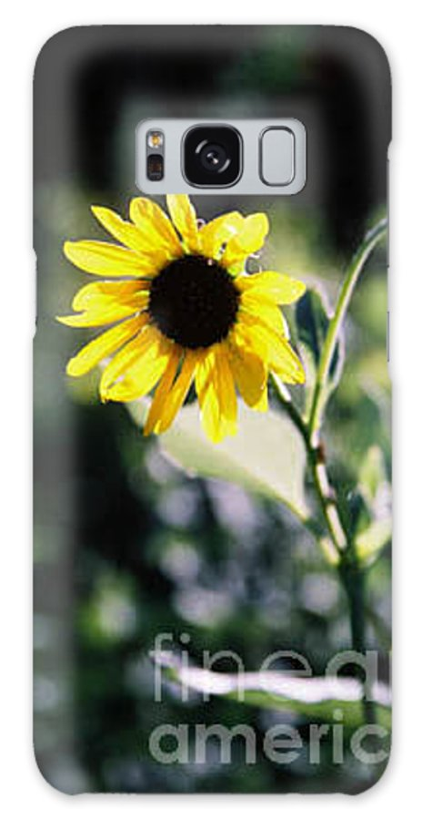 Sunflower Galaxy S8 Case featuring the photograph Summer Sunshine by Kathy McClure