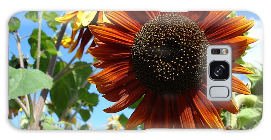 Sunflower Galaxy S8 Case featuring the photograph Summers Here by Susan Baker