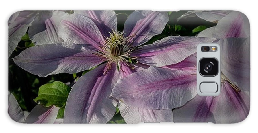 Clematis Galaxy S8 Case featuring the photograph Summer's Surprise by Timothy Porter