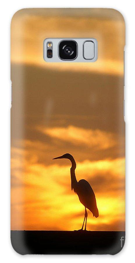 Joe Galaxy S8 Case featuring the photograph Sun Bird by Jack Norton