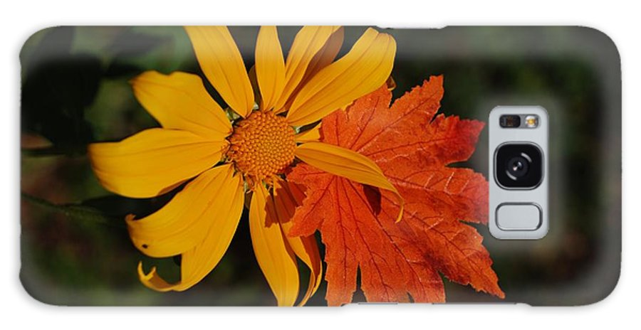 Pop Art Galaxy Case featuring the photograph Sun Flower And Leaf by Rob Hans