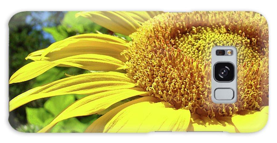Sunflower Galaxy S8 Case featuring the photograph Sun Flower Art Sunlit Sunflower Giclee Prints Baslee Troutman by Baslee Troutman