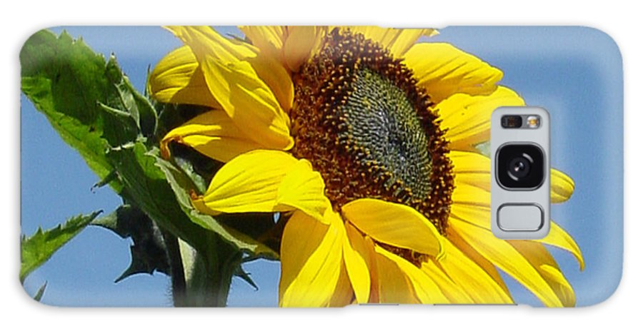 Sunflower Galaxy Case featuring the photograph Sun Goddess by Suzanne Gaff