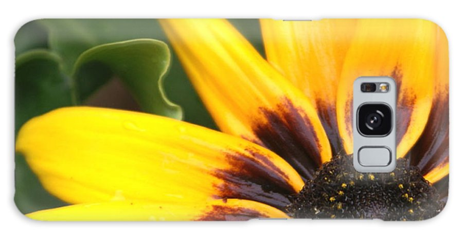 Brown Galaxy S8 Case featuring the photograph Sun Kist by Debbie May