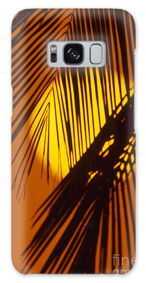 Bright Galaxy S8 Case featuring the photograph Sun Shining Through Palms by Ron Dahlquist - Printscapes