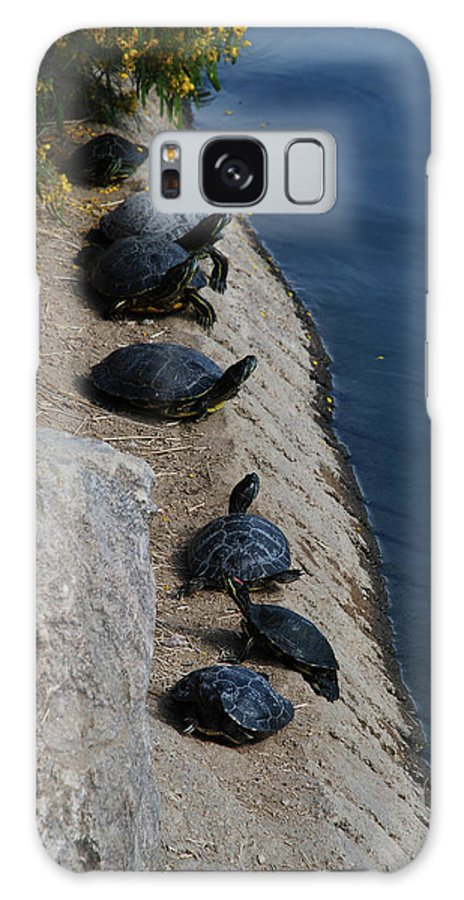 Turtle Galaxy S8 Case featuring the photograph Sunbathers by Carol Eliassen