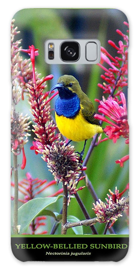 Animals Galaxy Case featuring the photograph Sunbird by Holly Kempe