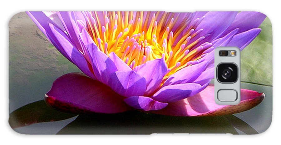 Water Lily Galaxy S8 Case featuring the photograph Sunburst Lily by John Lautermilch