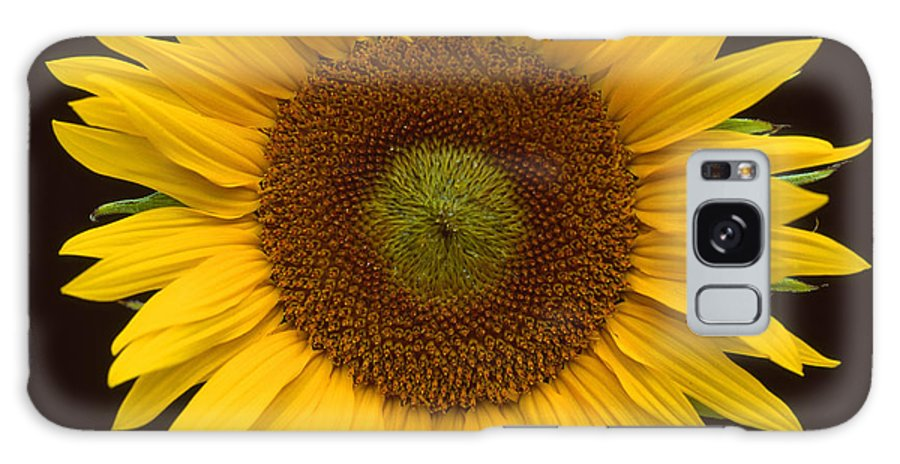 Yellow Galaxy S8 Case featuring the photograph Sunflower 3 by Bob Neiman