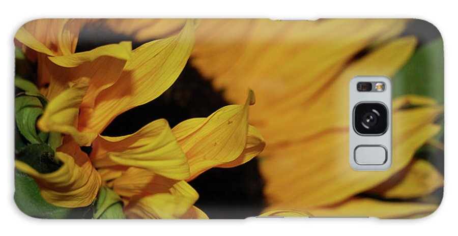 Sunflower Galaxy S8 Case featuring the photograph Sunflower by AJ Harlan