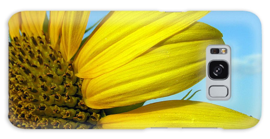 Sunflowers Galaxy S8 Case featuring the photograph Sunflower by Amanda Barcon