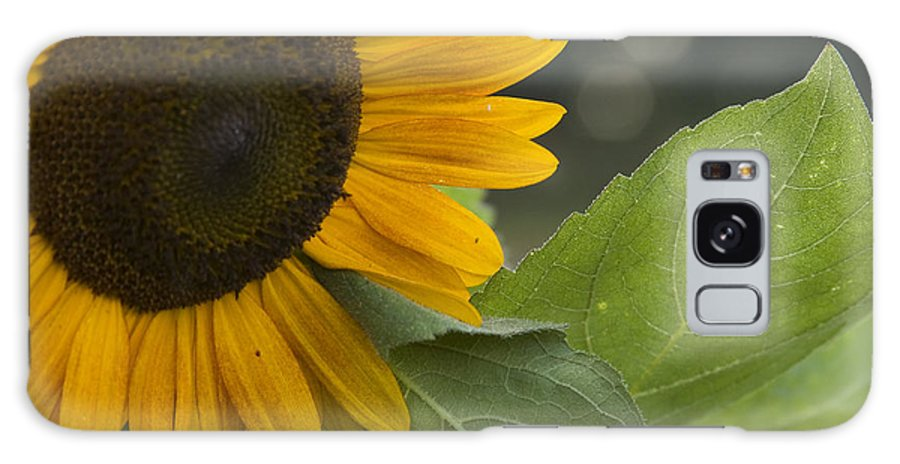 Flower Nature Farm Yellow Bright Sunflower Green Leaf Leaves Close Garden Organic Happy Galaxy S8 Case featuring the photograph Sunflower by Andrei Shliakhau