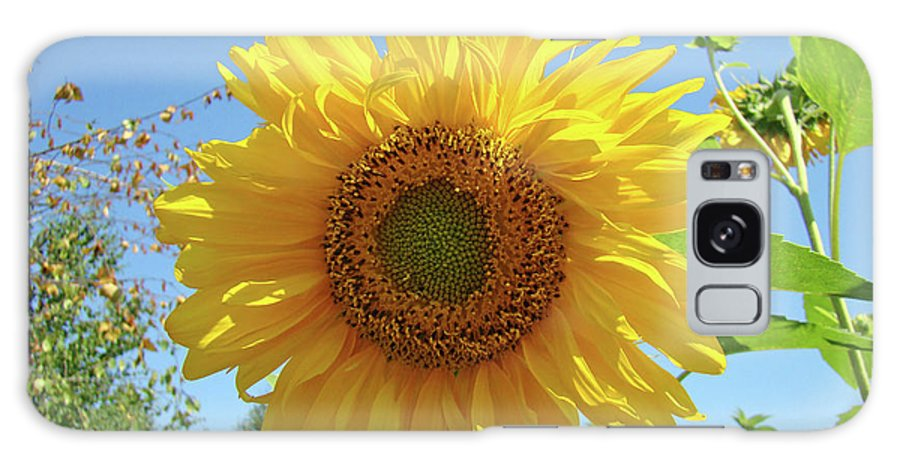 Sunflower Galaxy S8 Case featuring the photograph Sunflower Art Prints Sun Flower 2 Giclee Prints Baslee Troutman by Baslee Troutman