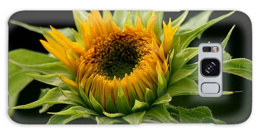 Betsy Lamere Galaxy S8 Case featuring the photograph Sunflower - Doubleshine by Betsy LaMere