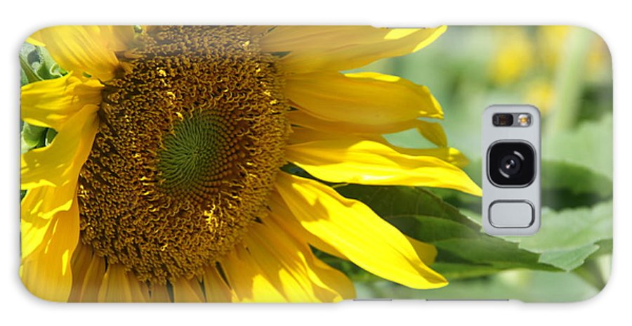 Sunflower Galaxy S8 Case featuring the painting Sunflower by Joi Electa
