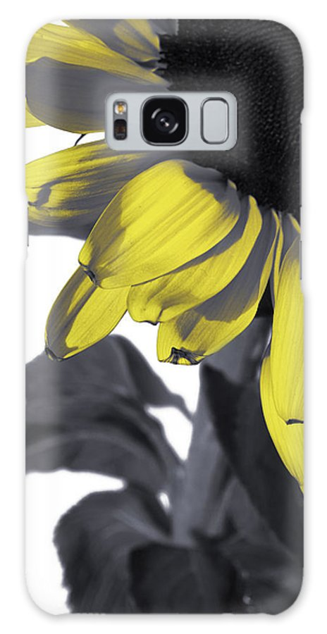 Sunflower Galaxy S8 Case featuring the photograph Sunflower by Kelly Jade King