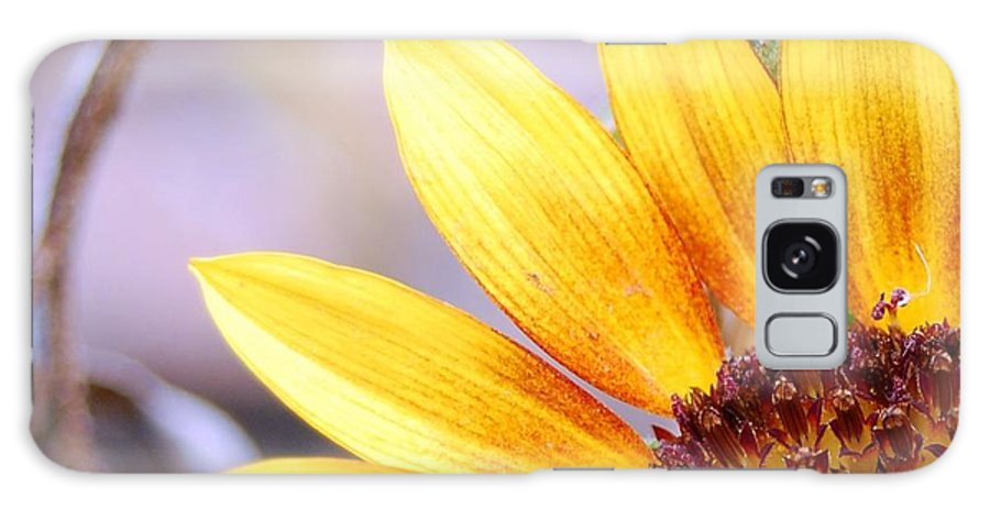 Sunflower Galaxy S8 Case featuring the photograph Sunflower Perspective by Amy Fose