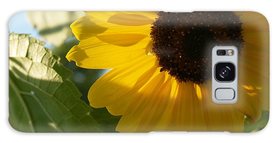 Sunflower Galaxy S8 Case featuring the photograph Sunflower Portrait With Leaf by Anna Lisa Yoder