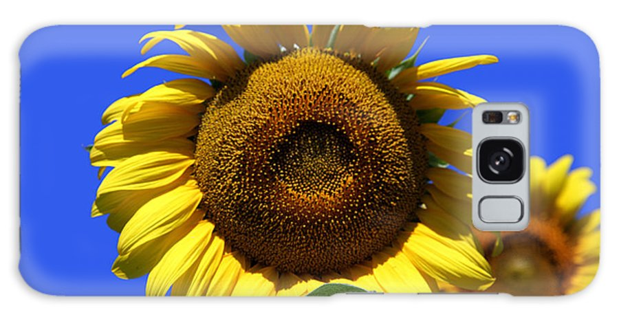 Sunflowers Galaxy S8 Case featuring the photograph Sunflower Series 09 by Amanda Barcon