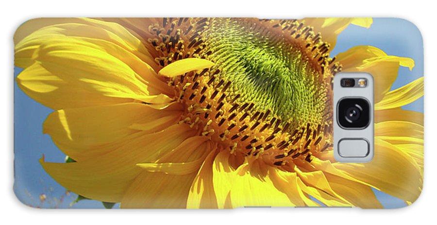 Sunflower Galaxy S8 Case featuring the photograph Sunflower Sunlit Sun Flowers 6 Blue Sky Giclee Art Prints Baslee Troutman by Baslee Troutman