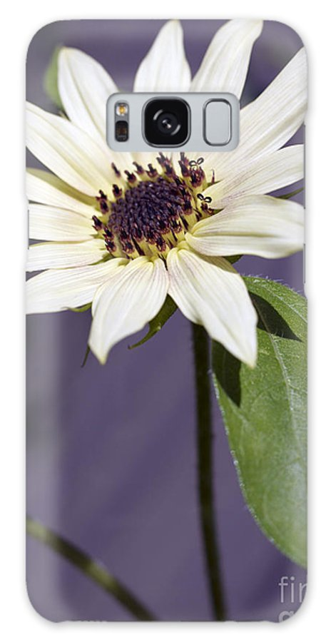 Helianthus Annus Galaxy Case featuring the photograph Sunflower by Tony Cordoza