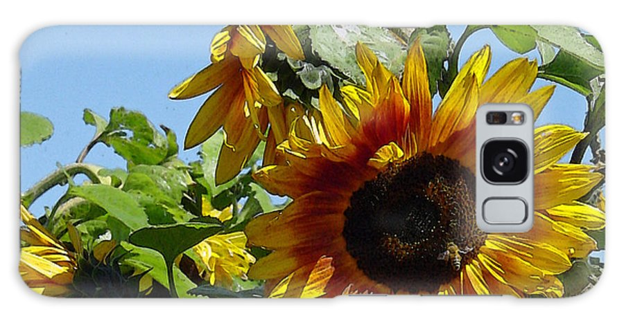 Sunflower Galaxy S8 Case featuring the photograph Sunflower Trio by Suzanne Gaff