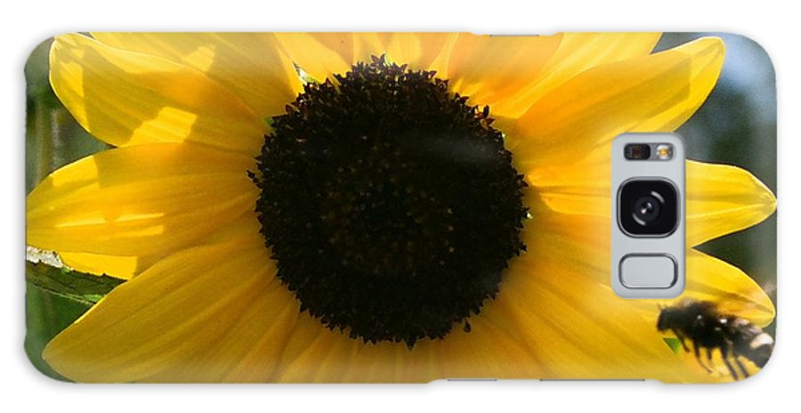 Flower Galaxy S8 Case featuring the photograph Sunflower With Bee by Dean Triolo
