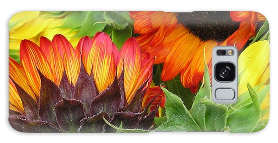 Floral Galaxy Case featuring the photograph Sunflower2 by Ellen Leigh