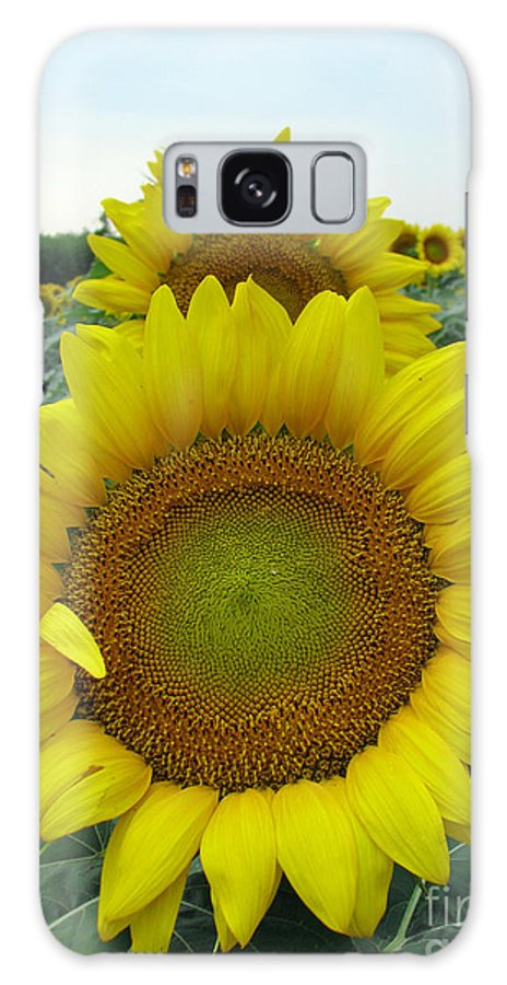 Sunflowers Galaxy Case featuring the photograph Sunflowers by Amanda Barcon