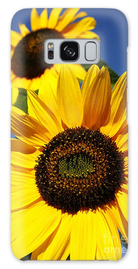 Sunflowers Galaxy S8 Case featuring the photograph Sunflowers by Gaspar Avila