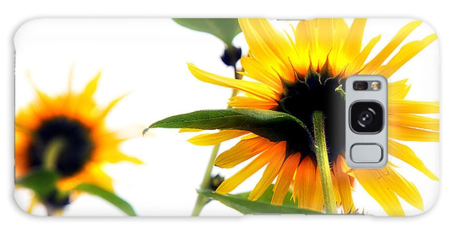 Sunflowers Galaxy S8 Case featuring the photograph Sunflowers by Mal Bray