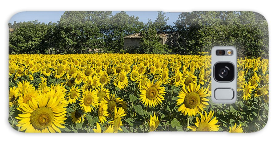 Color Galaxy S8 Case featuring the photograph Sunflowers Provence by Juergen Held