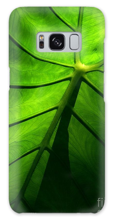 Green Galaxy S8 Case featuring the photograph Sunglow Green Leaf by Patricia L Davidson