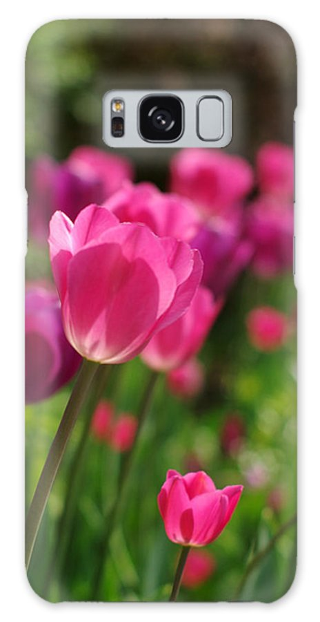 Tulips Galaxy S8 Case featuring the photograph Sunkissed by Linda Mishler