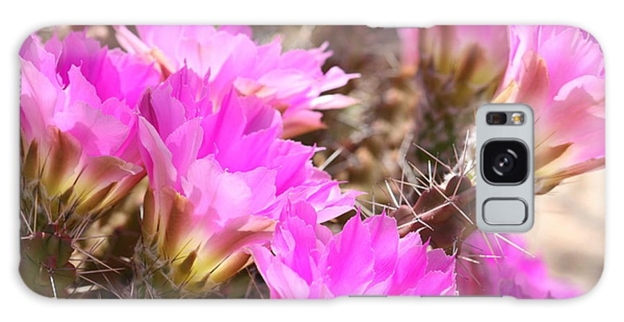 Pink Cactus Flowers Galaxy S8 Case featuring the photograph Sunlight On Pink Cactus Blooms by Carol Groenen