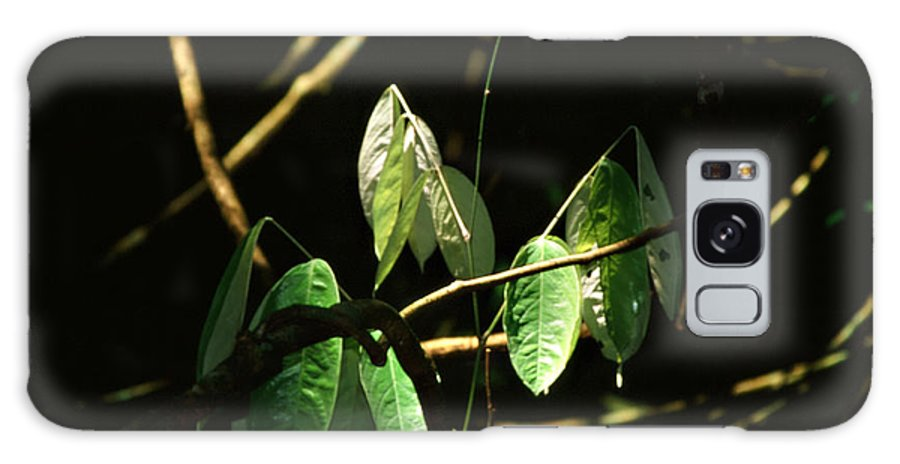 Leaves Galaxy Case featuring the photograph Sunlit Leaves by Kathy McClure
