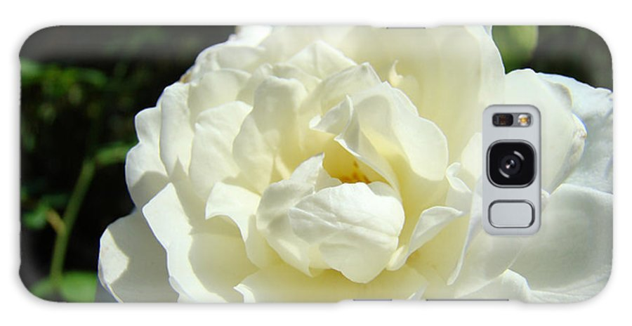 Rose Galaxy S8 Case featuring the photograph Sunlit White Rose Art Print Floral Giclle Print Baslee Troutman by Baslee Troutman