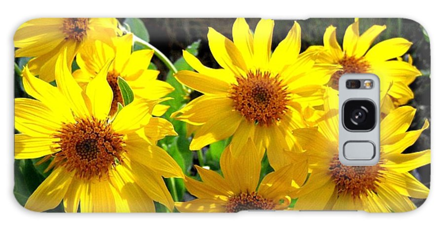 Wildflowers Galaxy S8 Case featuring the photograph Sunlit Wild Sunflowers by Will Borden