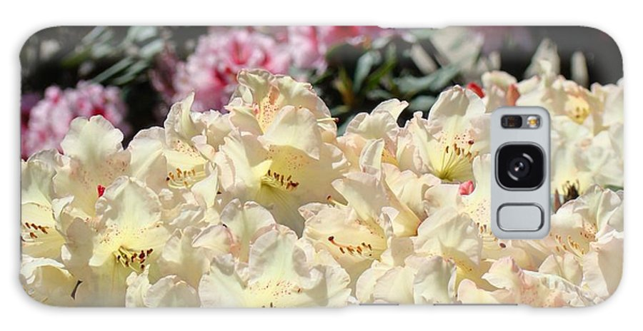 Rhodies Galaxy S8 Case featuring the photograph Sunlit Yellow Rhodies Art Print Creamy Rhododendrons Flowers Baslee Troutman by Baslee Troutman