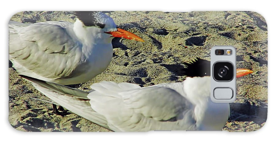 Tern Galaxy S8 Case featuring the photograph Sunning Terns by D Hackett