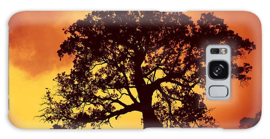 Gum Tree Galaxy S8 Case featuring the photograph Sunrise Gum by Mike Dawson