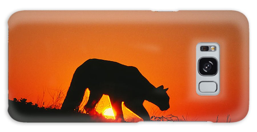 Puma Galaxy S8 Case featuring the photograph Sunrise Stalk by D Robert Franz