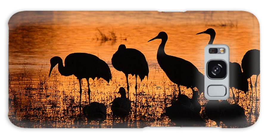 Crane Galaxy S8 Case featuring the photograph Sunset Reflections Of Cranes And Geese by Max Allen